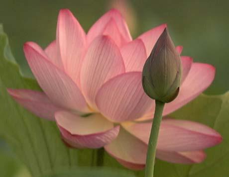 Lotus s