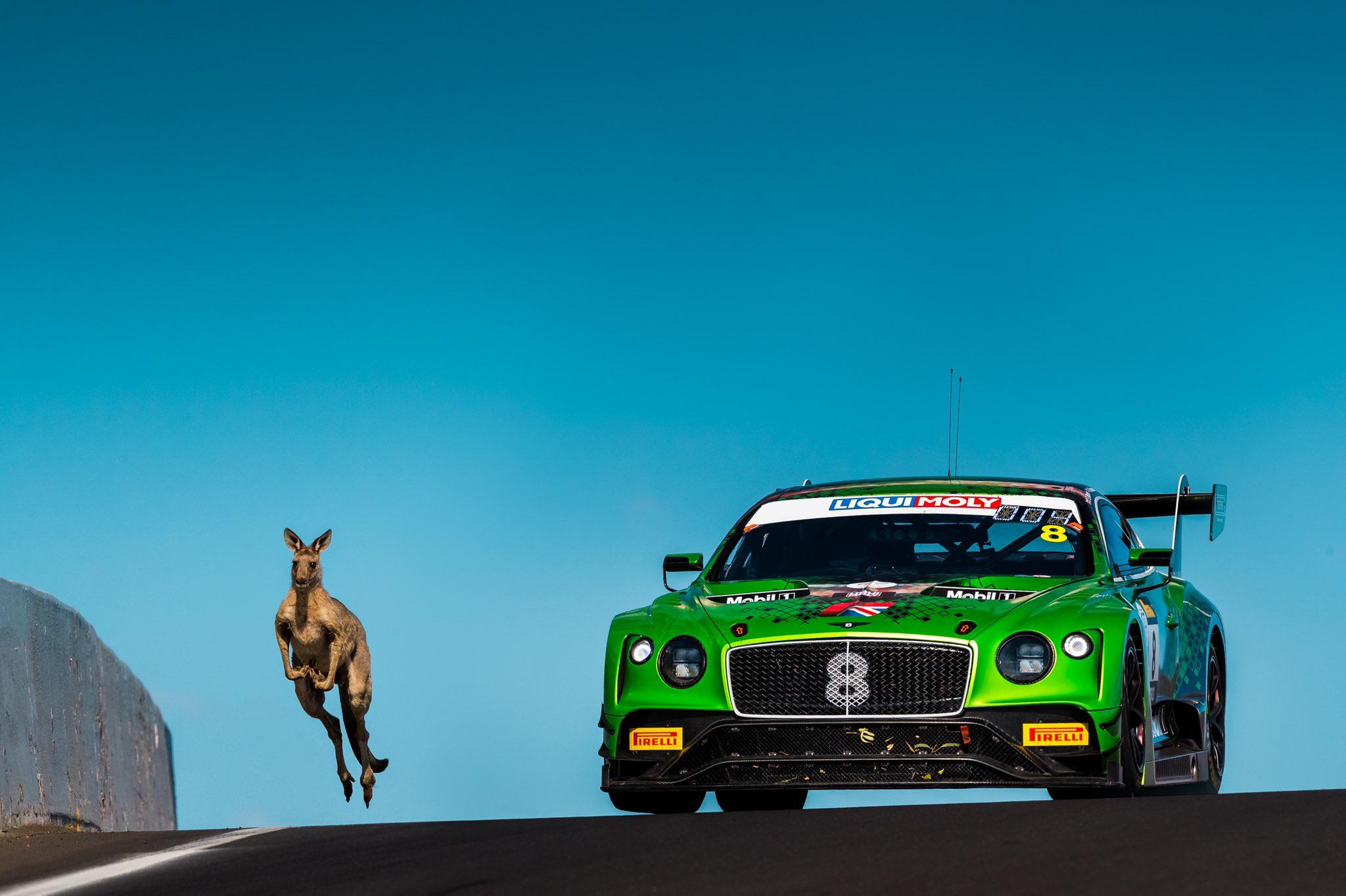 The Bentley Continental GT3 is such a chonker! Kangaroo for reference.